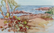 Sea Grapes 3, Key West, watercolor and ink
