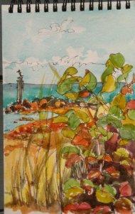 Sea Grapes 2, at the Beach, Watercolor
