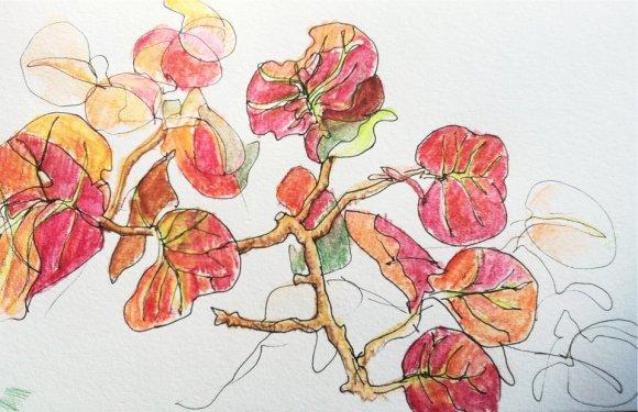 Sea Grapes 1, watercolor sketch