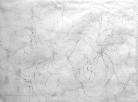 amarylis drwg.web